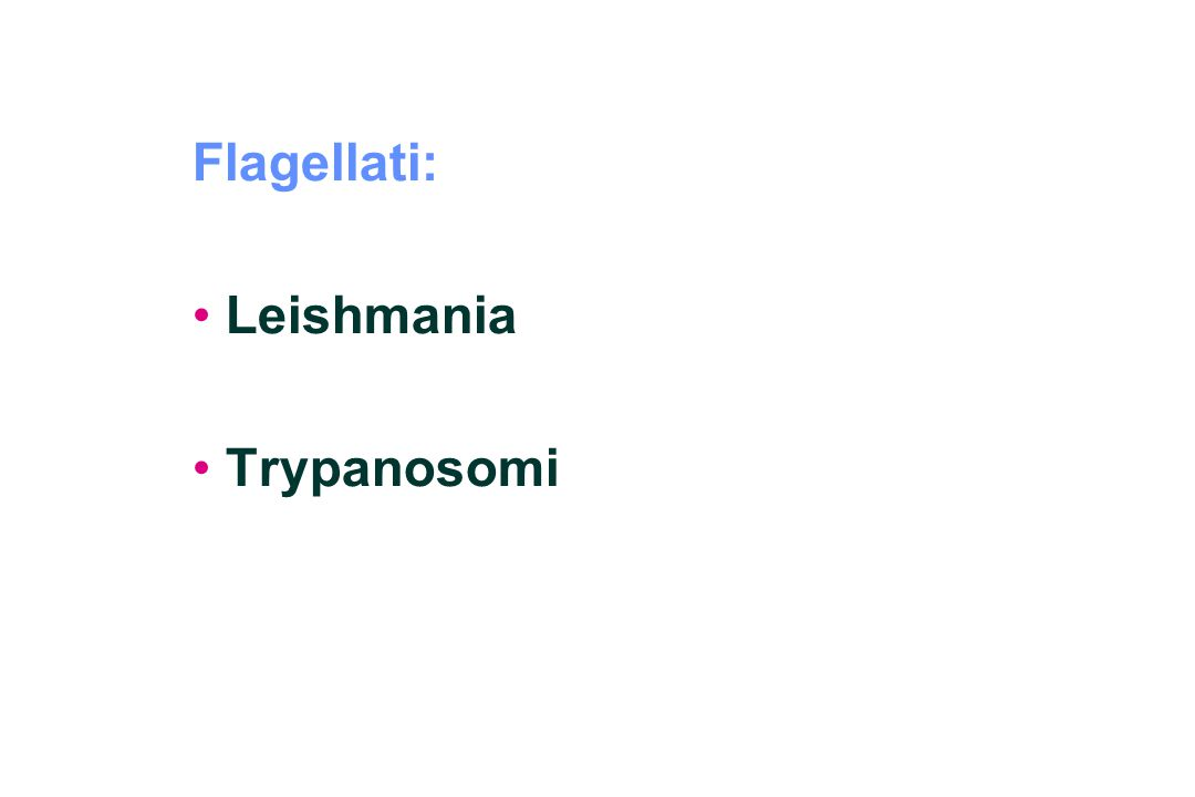 Flagellati: Leishmania Trypanosomi