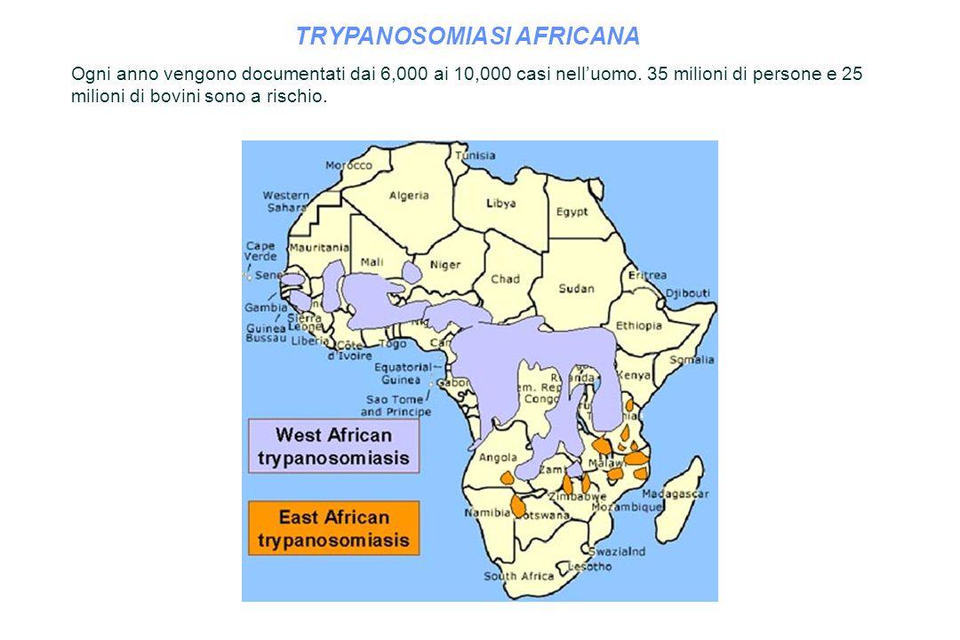 TRYPANOSOMIASI AFRICANA