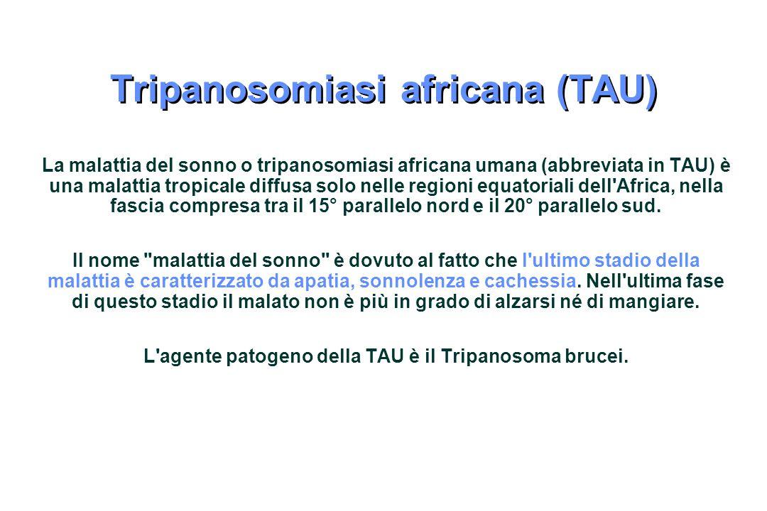 Tripanosomiasi africana (TAU)