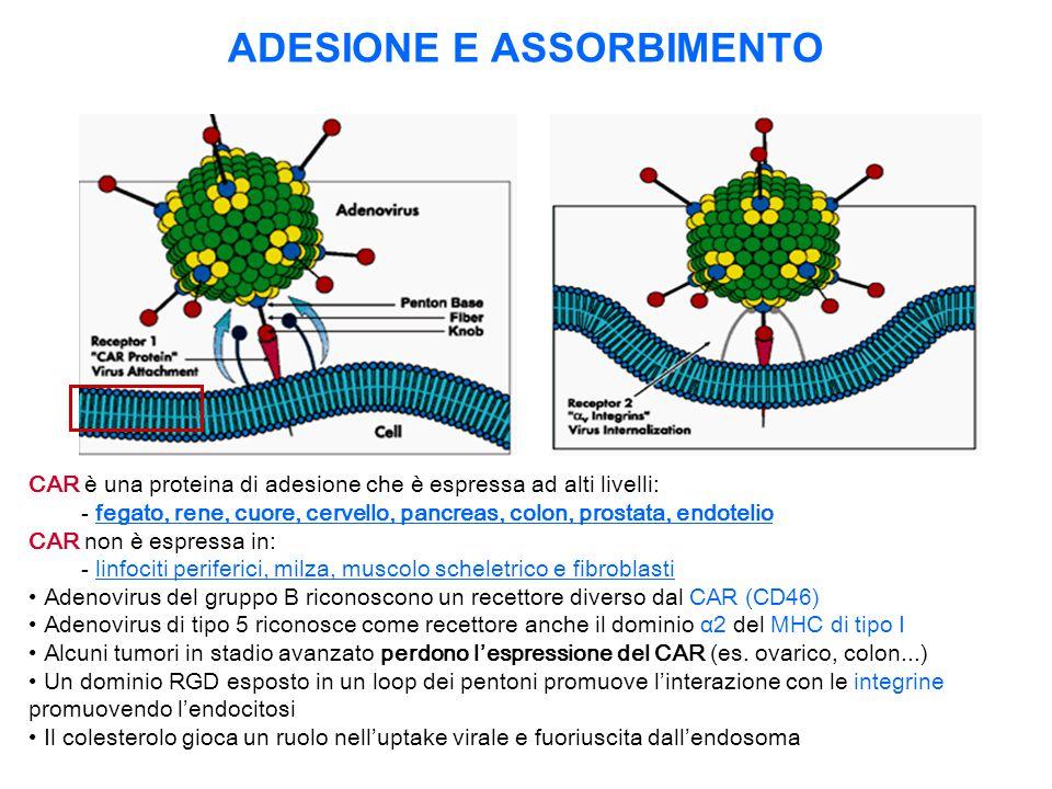 ADESIONE E ASSORBIMENTO