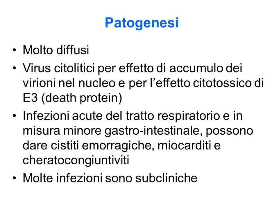 Patogenesi Molto diffusi