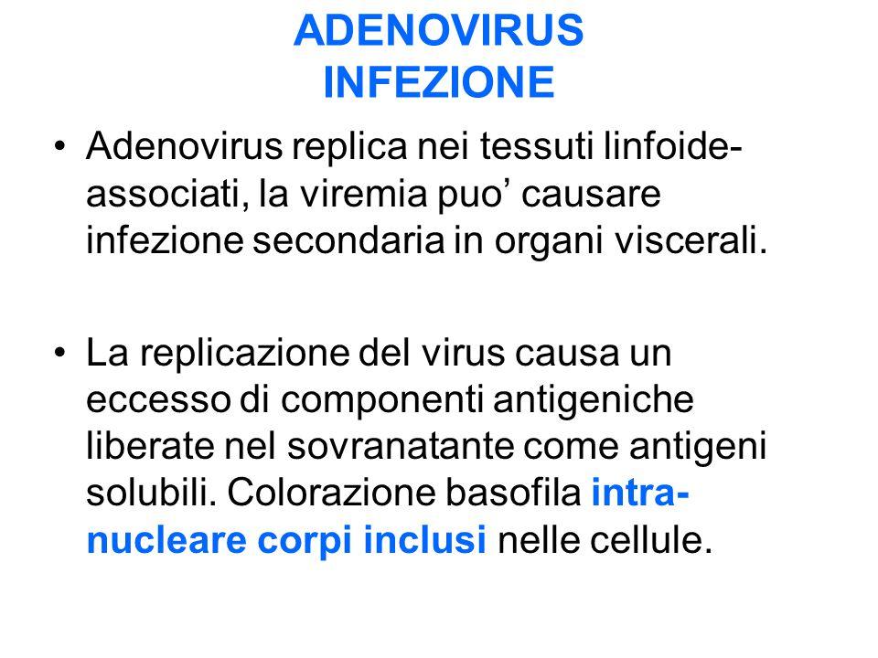 ADENOVIRUS INFEZIONE Adenovirus replica nei tessuti linfoide-associati, la viremia puo' causare infezione secondaria in organi viscerali.