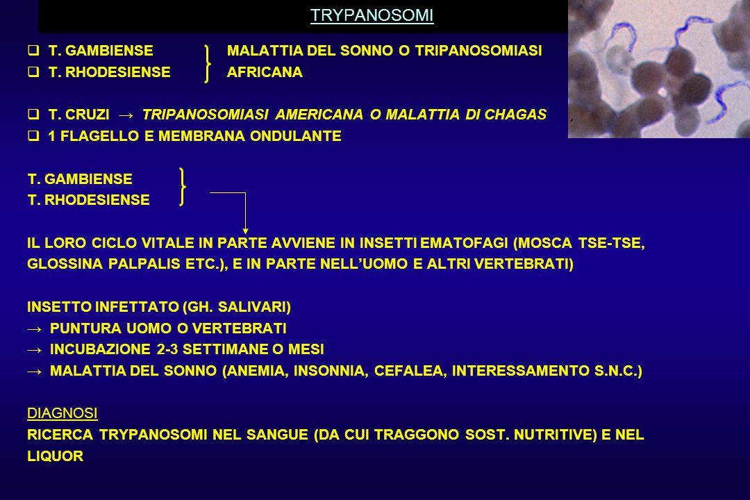 TRYPANOSOMI T. GAMBIENSE MALATTIA DEL SONNO O TRIPANOSOMIASI
