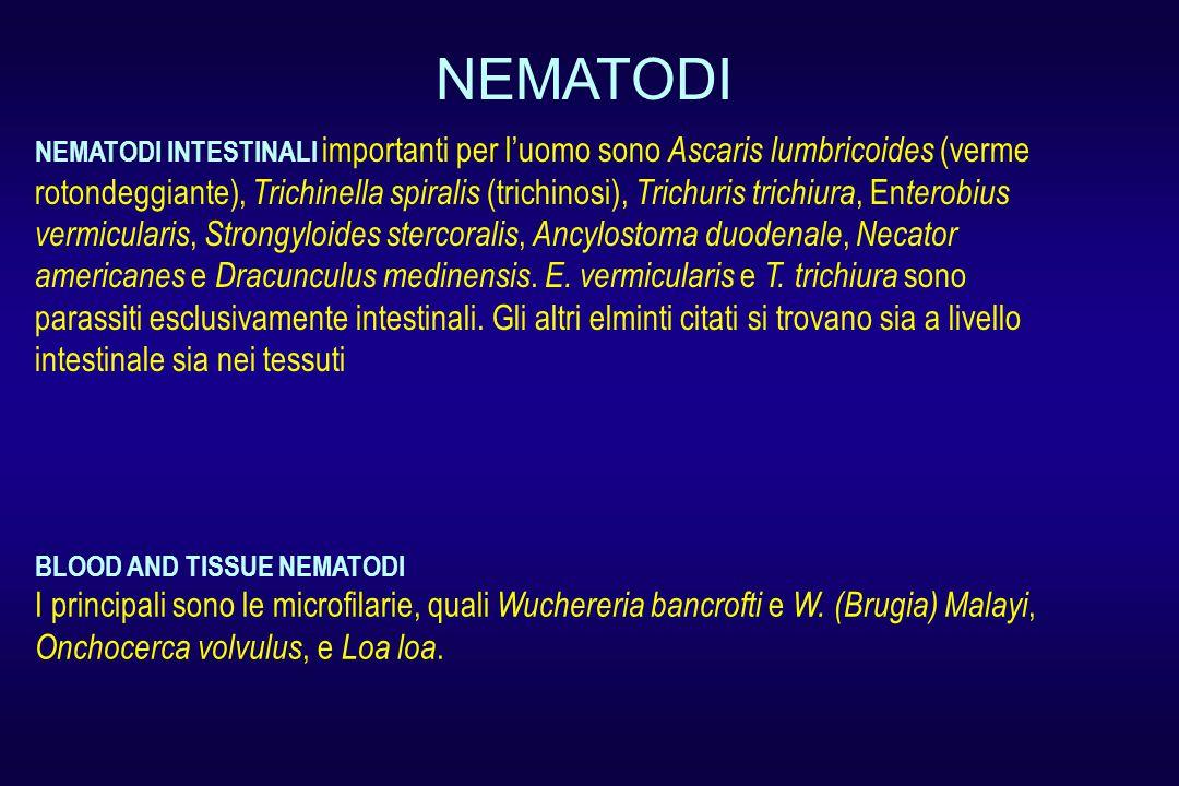 NEMATODI