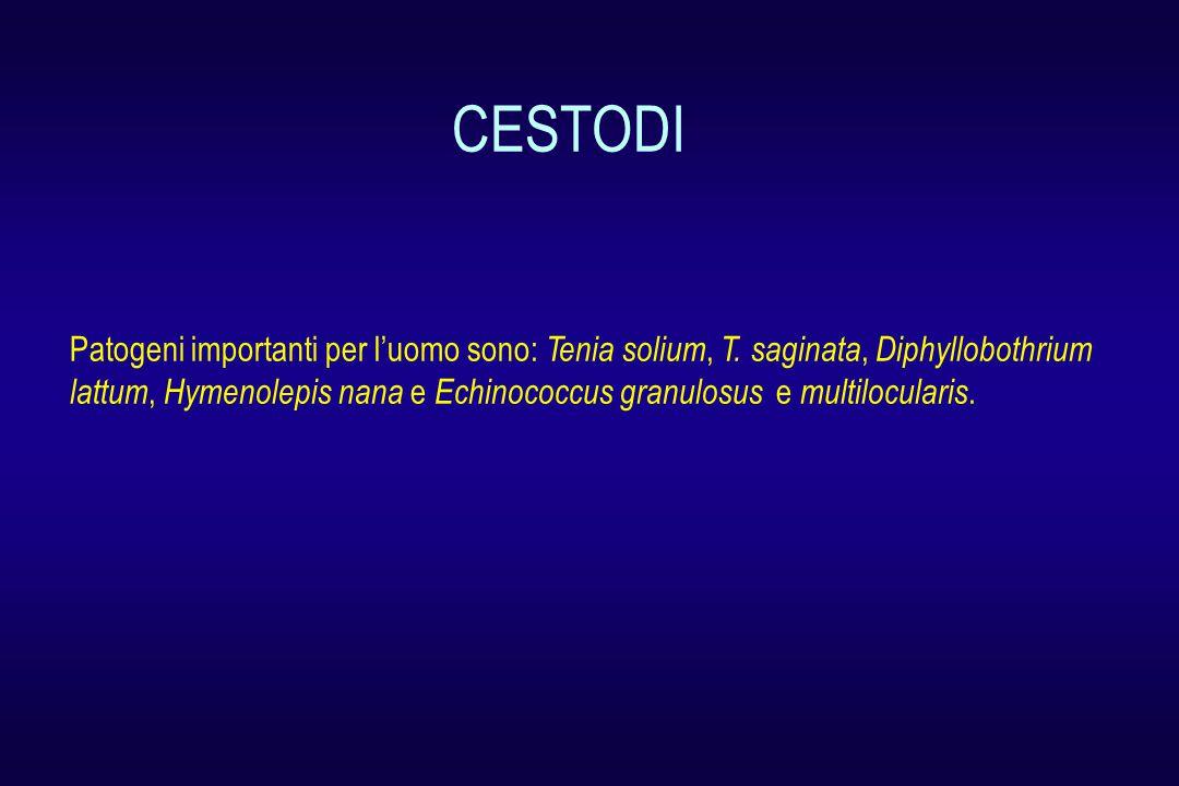 CESTODI