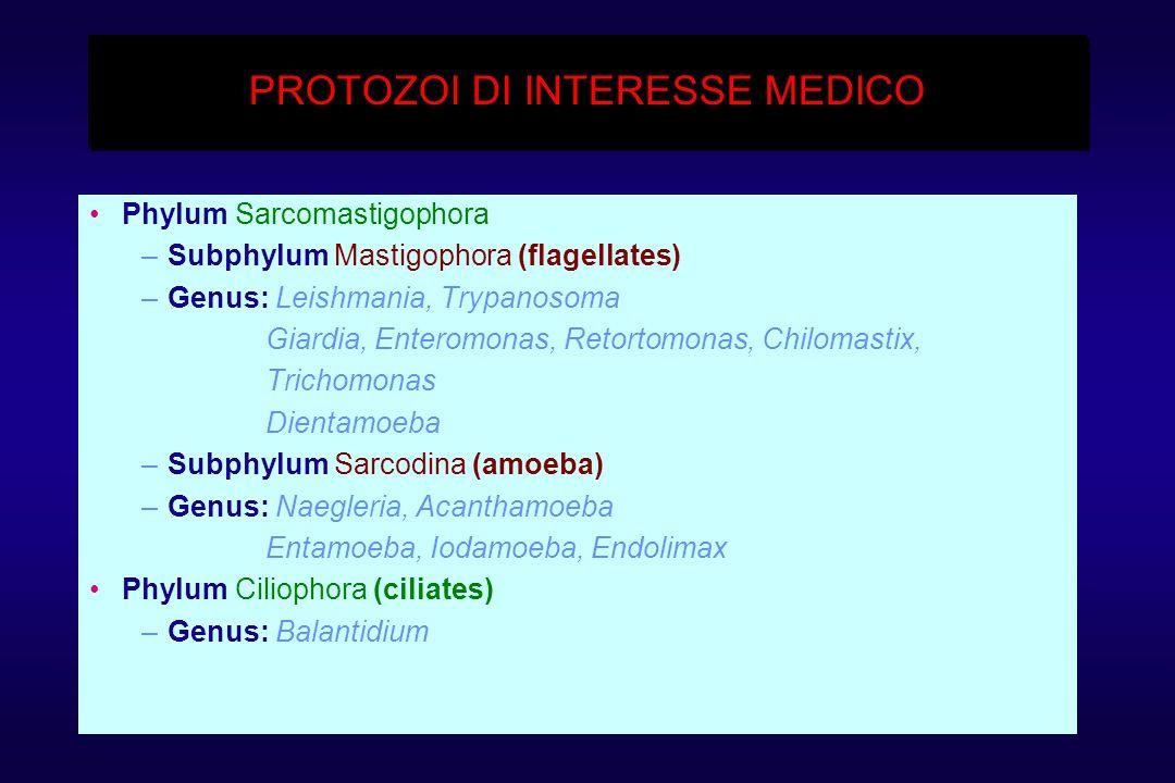 PROTOZOI DI INTERESSE MEDICO