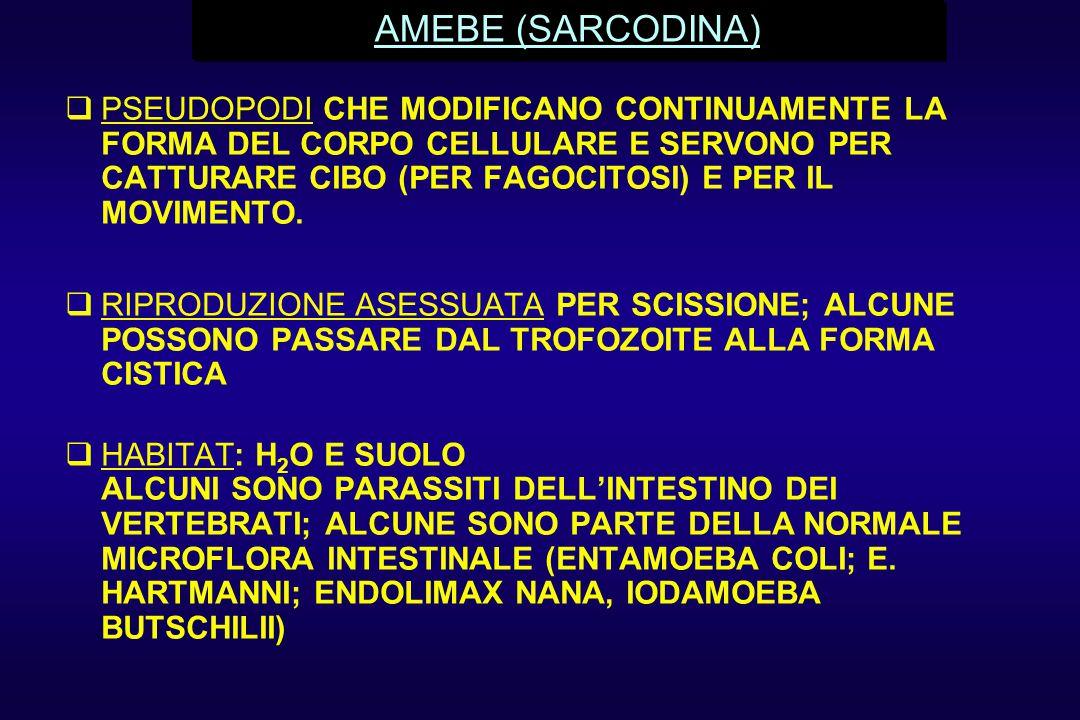 AMEBE (SARCODINA)