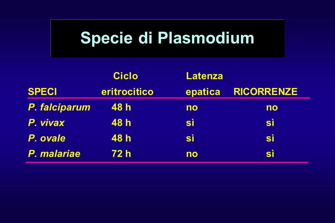 Specie di Plasmodium Ciclo Latenza