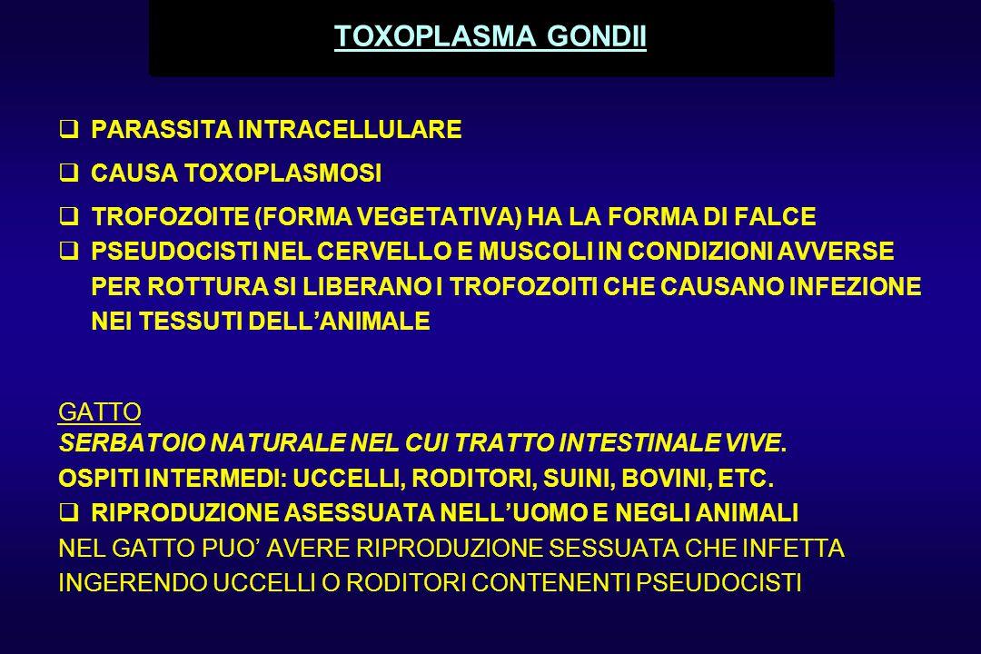 TOXOPLASMA GONDII PARASSITA INTRACELLULARE CAUSA TOXOPLASMOSI
