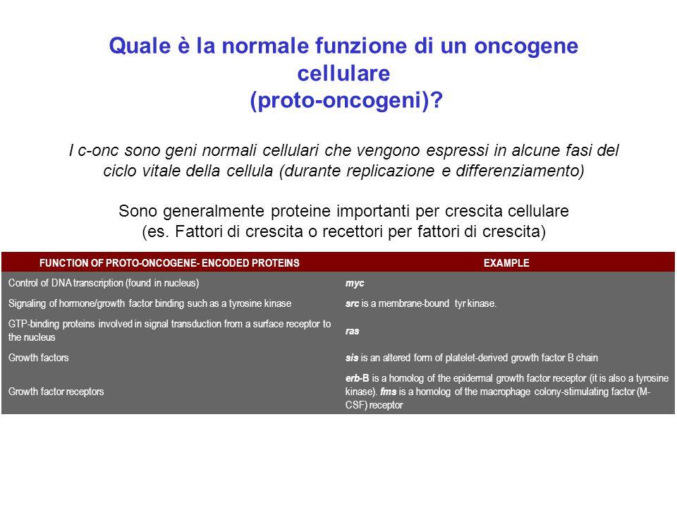 Quale è la normale funzione di un oncogene cellulare (proto-oncogeni)