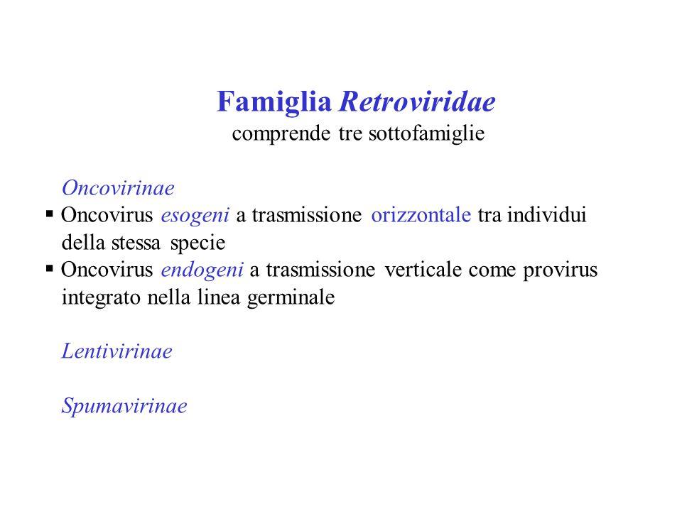 Famiglia Retroviridae