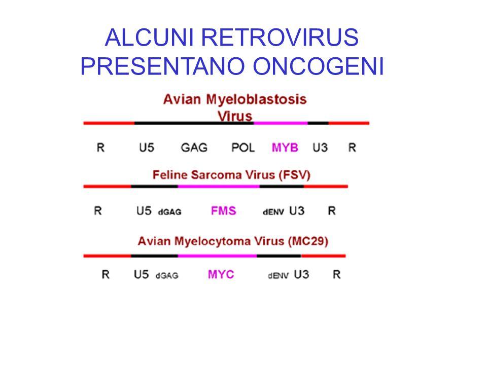 ALCUNI RETROVIRUS PRESENTANO ONCOGENI