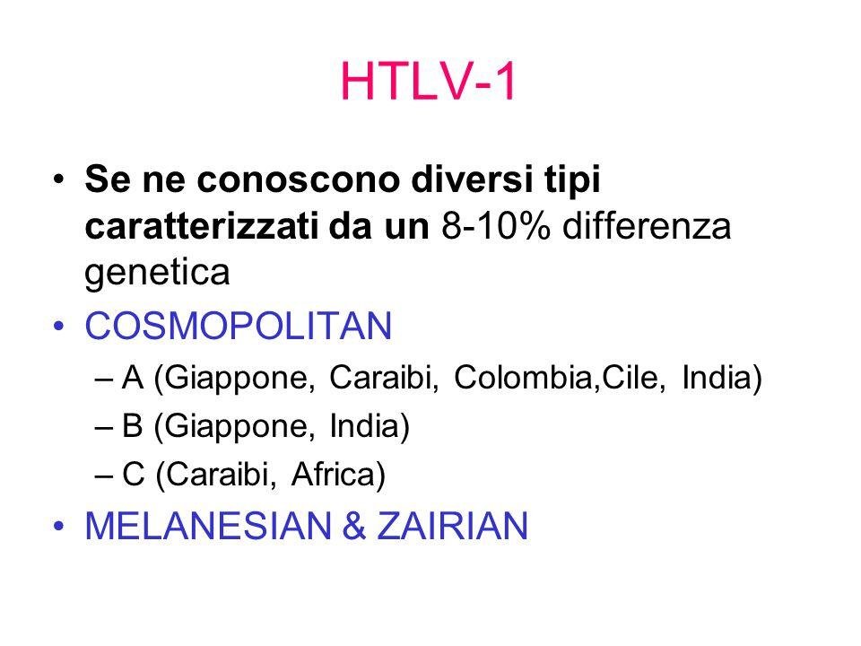HTLV-1 Se ne conoscono diversi tipi caratterizzati da un 8-10% differenza genetica. COSMOPOLITAN. A (Giappone, Caraibi, Colombia,Cile, India)