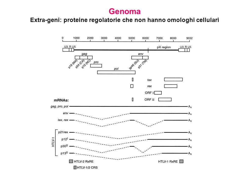 Extra-geni: proteine regolatorie che non hanno omologhi cellulari