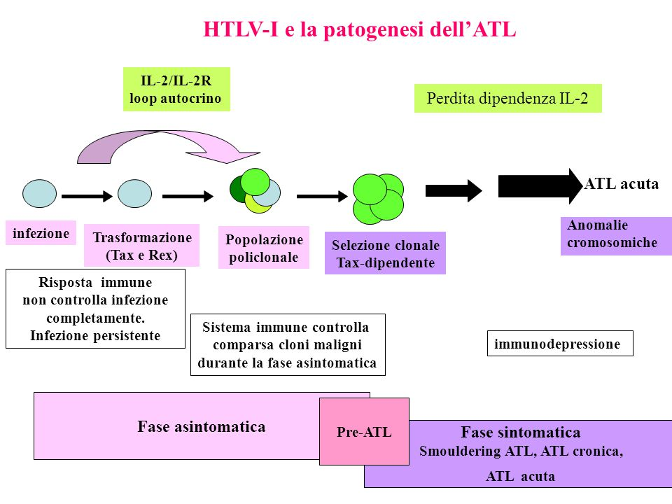 HTLV-I e la patogenesi dell'ATL