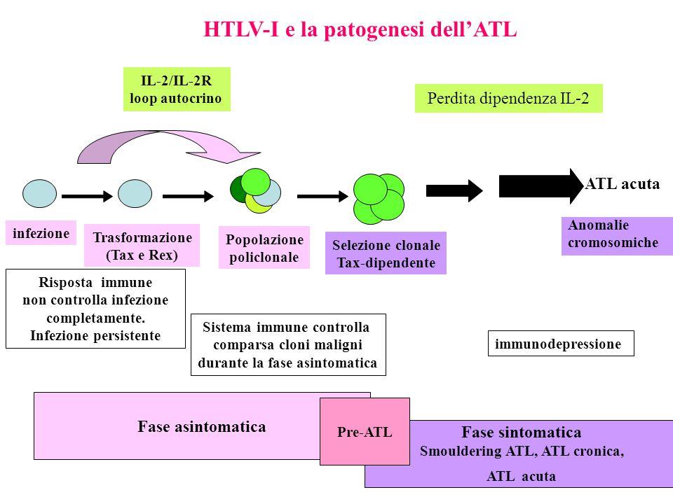 HTLV-I e la patogenesi dell'ATL