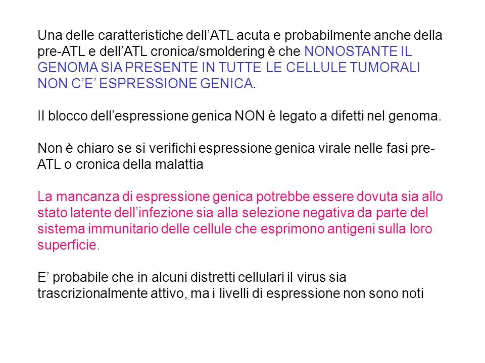 Una delle caratteristiche dell'ATL acuta e probabilmente anche della pre-ATL e dell'ATL cronica/smoldering è che NONOSTANTE IL GENOMA SIA PRESENTE IN TUTTE LE CELLULE TUMORALI NON C'E' ESPRESSIONE GENICA.