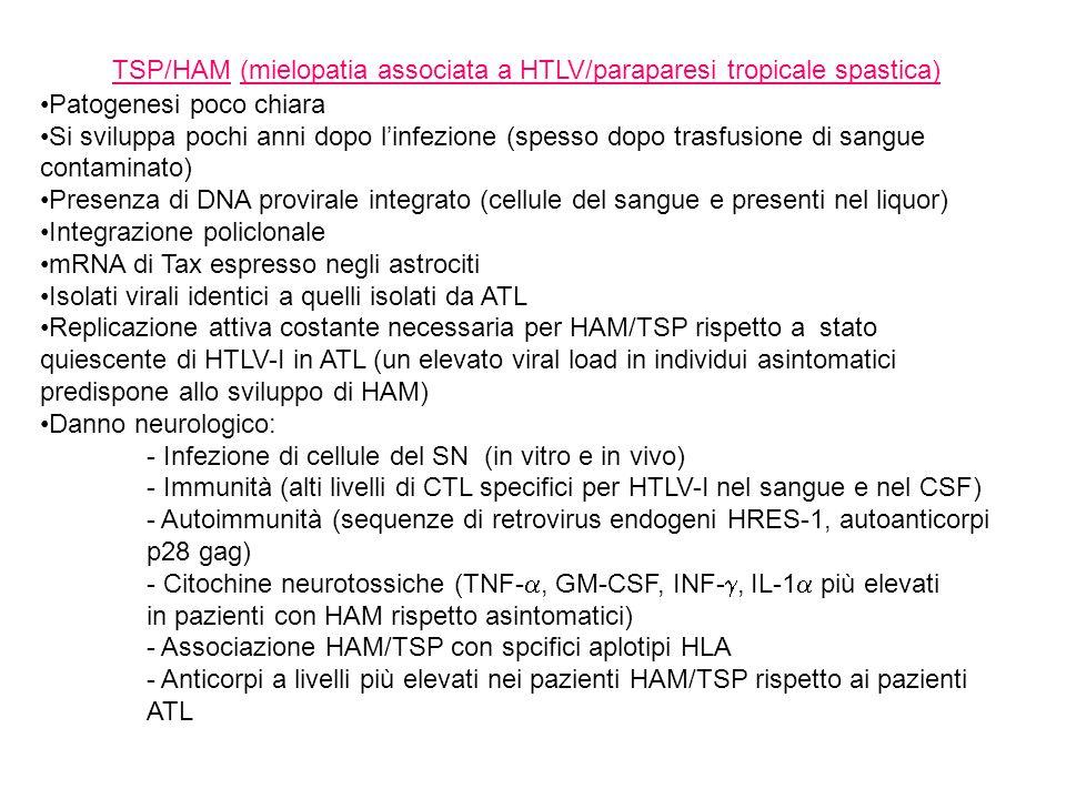 TSP/HAM (mielopatia associata a HTLV/paraparesi tropicale spastica)