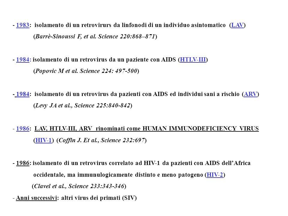 1983: isolamento di un retrovirurs da linfonodi di un individuo asintomatico (LAV)