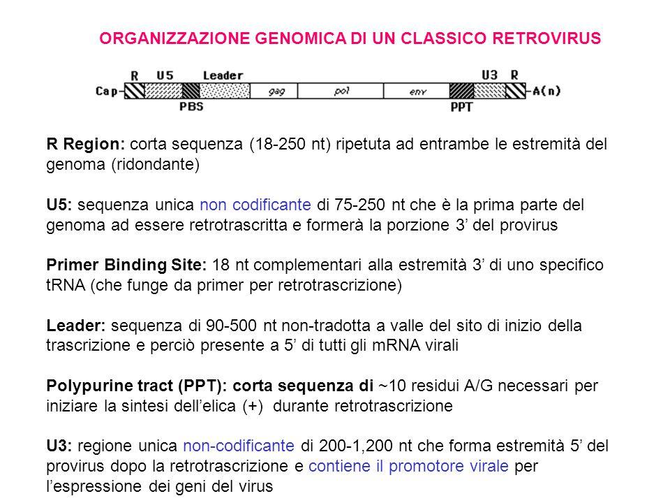 ORGANIZZAZIONE GENOMICA DI UN CLASSICO RETROVIRUS
