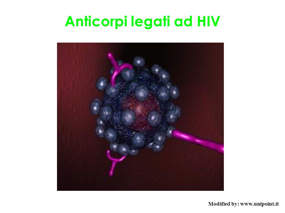 Anticorpi legati ad HIV