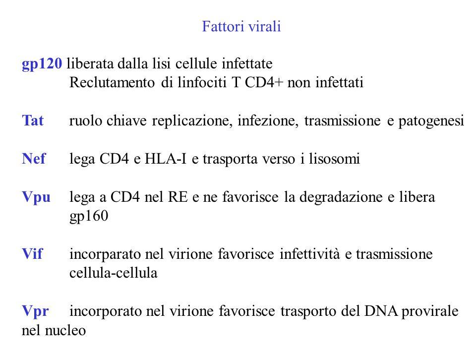 Fattori virali gp120 liberata dalla lisi cellule infettate. Reclutamento di linfociti T CD4+ non infettati.