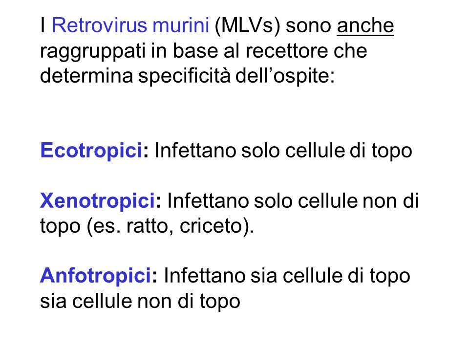 I Retrovirus murini (MLVs) sono anche raggruppati in base al recettore che determina specificità dell'ospite: