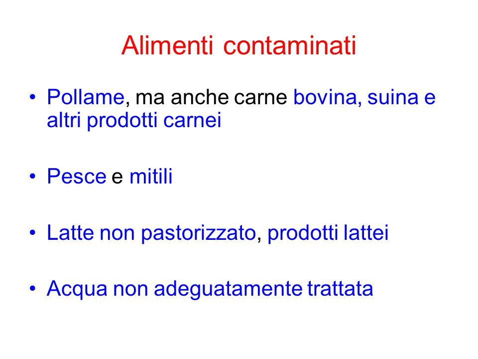 Alimenti contaminati Pollame, ma anche carne bovina, suina e altri prodotti carnei. Pesce e mitili.