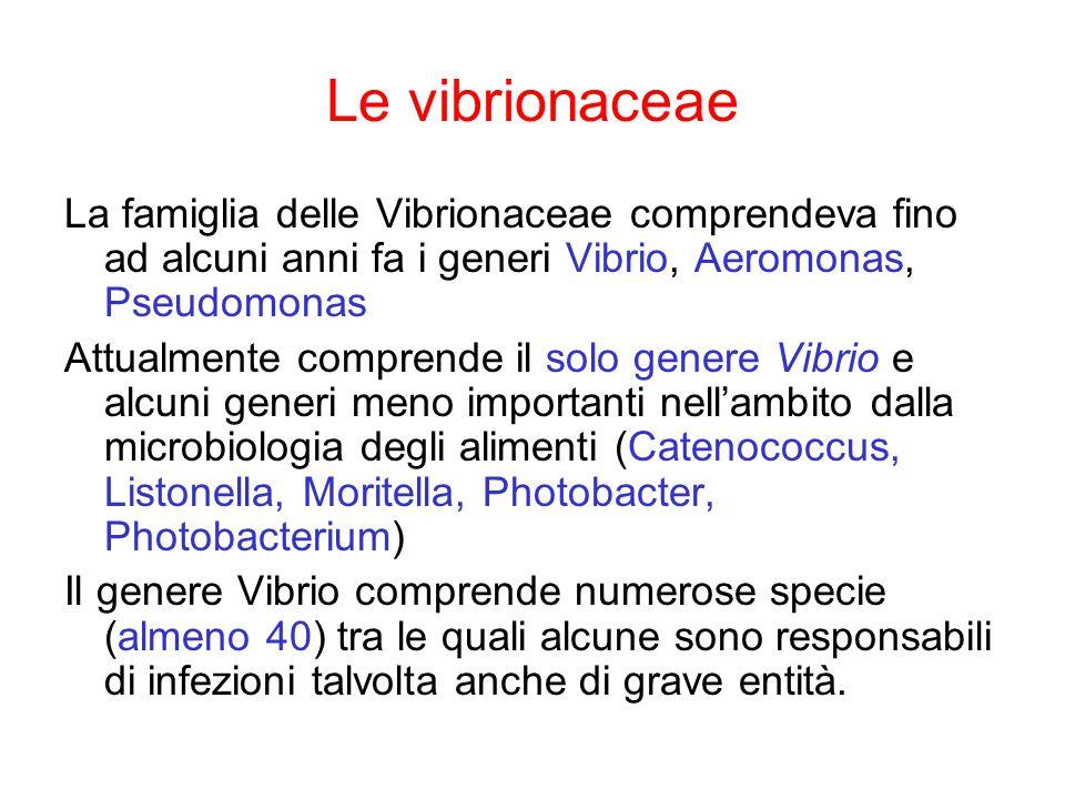 Le vibrionaceae La famiglia delle Vibrionaceae comprendeva fino ad alcuni anni fa i generi Vibrio, Aeromonas, Pseudomonas.