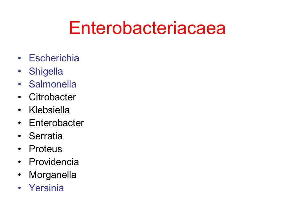 Enterobacteriacaea Escherichia Shigella Salmonella Citrobacter