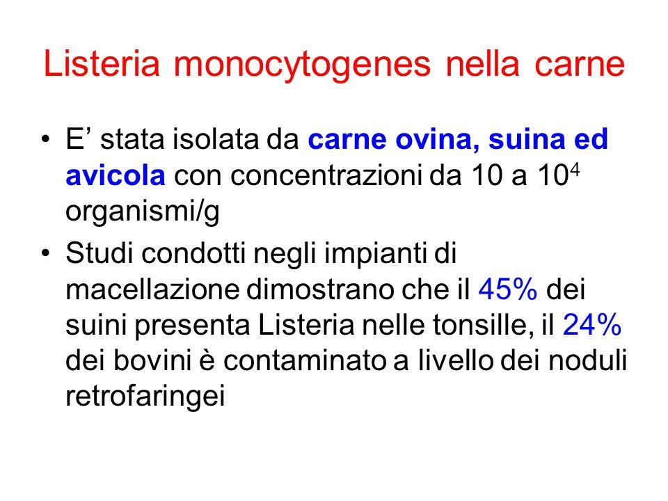 Listeria monocytogenes nella carne