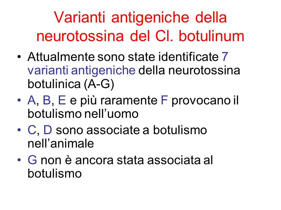 Varianti antigeniche della neurotossina del Cl. botulinum