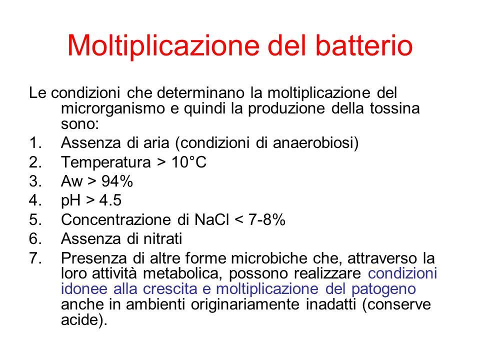Moltiplicazione del batterio