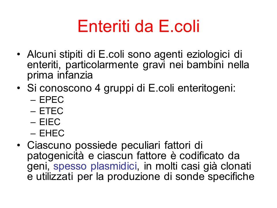 Enteriti da E.coli Alcuni stipiti di E.coli sono agenti eziologici di enteriti, particolarmente gravi nei bambini nella prima infanzia.