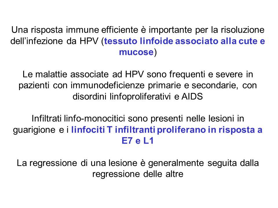 Una risposta immune efficiente è importante per la risoluzione dell'infezione da HPV (tessuto linfoide associato alla cute e mucose)