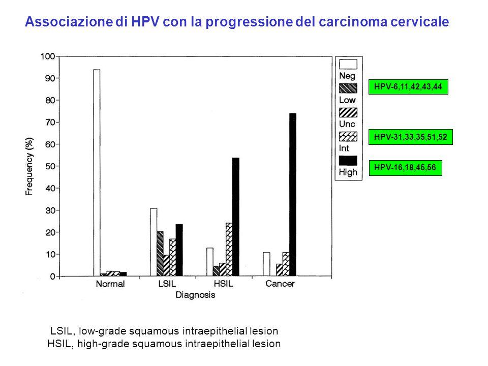 Associazione di HPV con la progressione del carcinoma cervicale