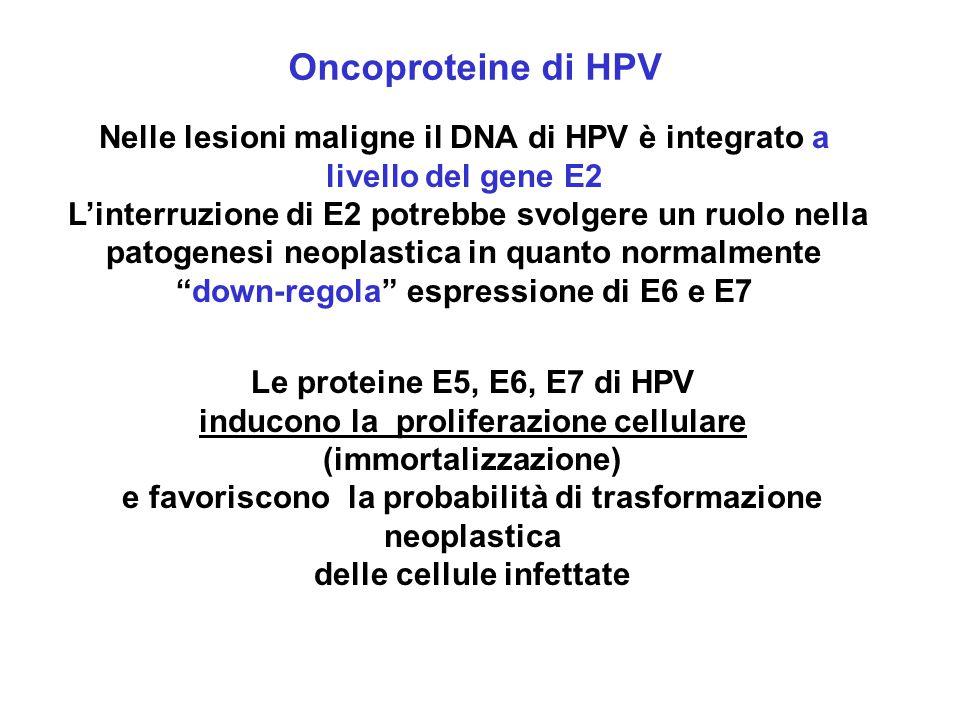 Oncoproteine di HPV Nelle lesioni maligne il DNA di HPV è integrato a livello del gene E2.