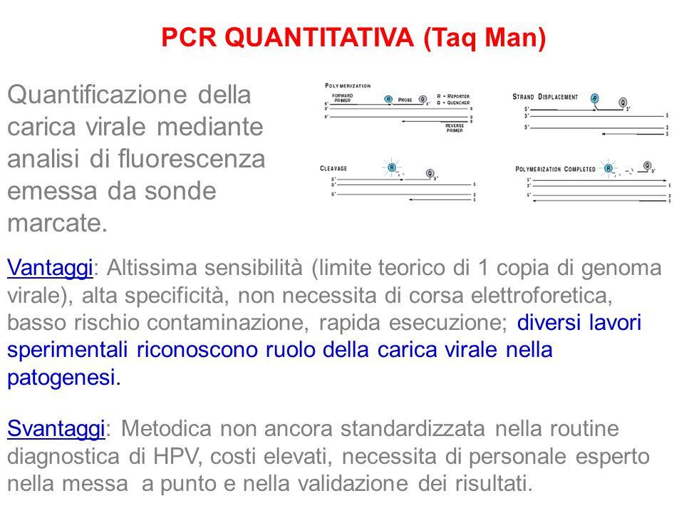 PCR QUANTITATIVA (Taq Man)