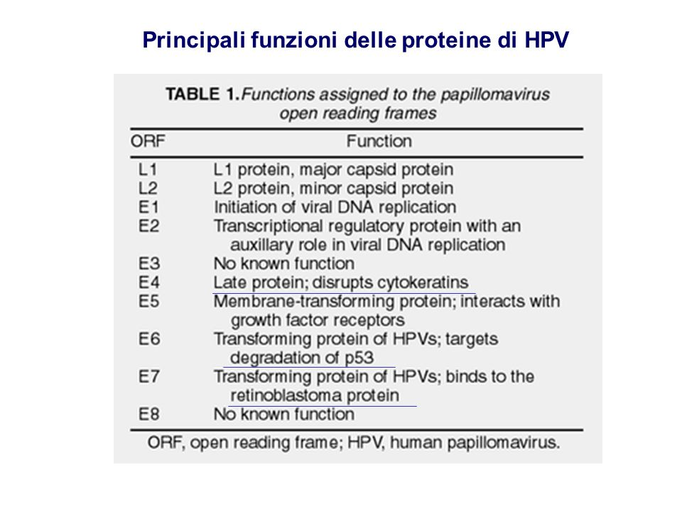Principali funzioni delle proteine di HPV