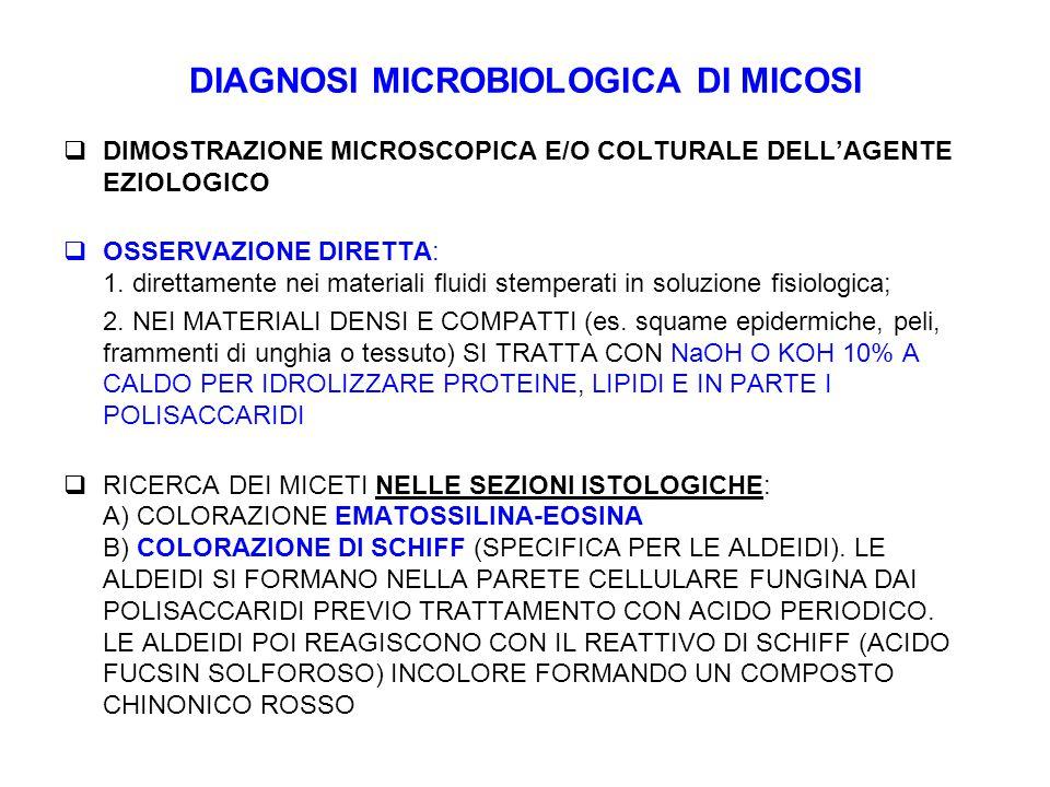 DIAGNOSI MICROBIOLOGICA DI MICOSI