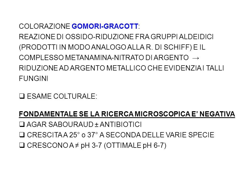 COLORAZIONE GOMORI-GRACOTT: