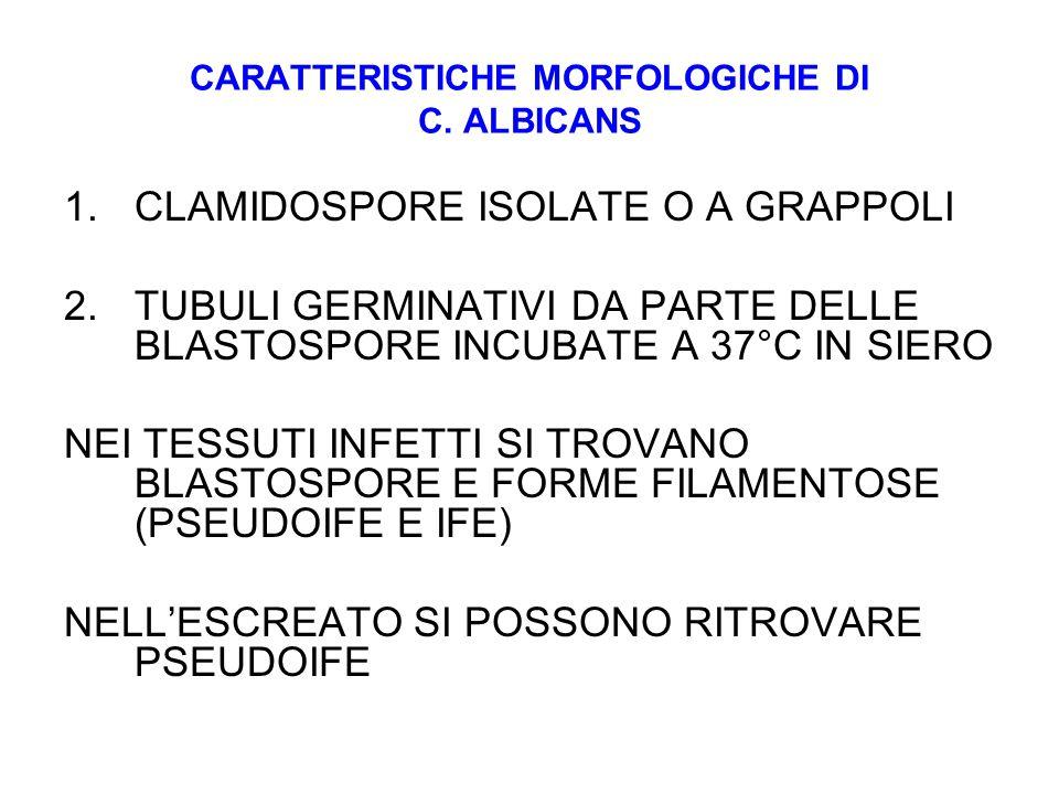 CARATTERISTICHE MORFOLOGICHE DI C. ALBICANS