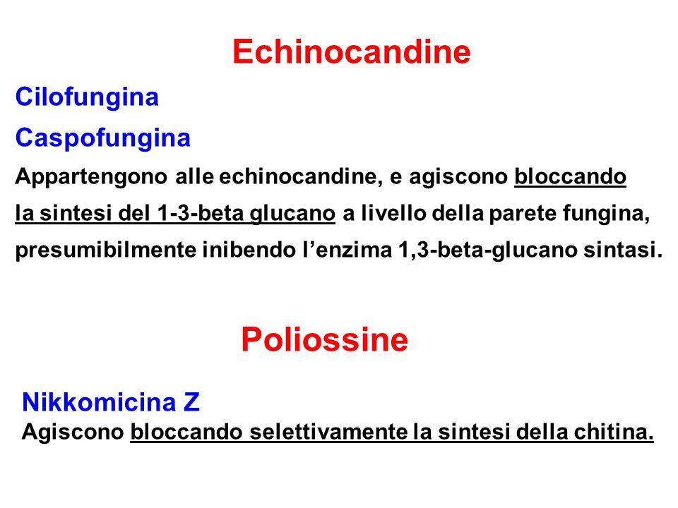 Echinocandine Cilofungina Caspofungina Poliossine Nikkomicina Z