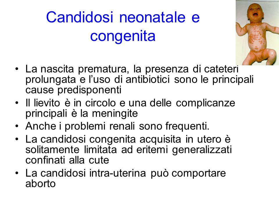 Candidosi neonatale e congenita