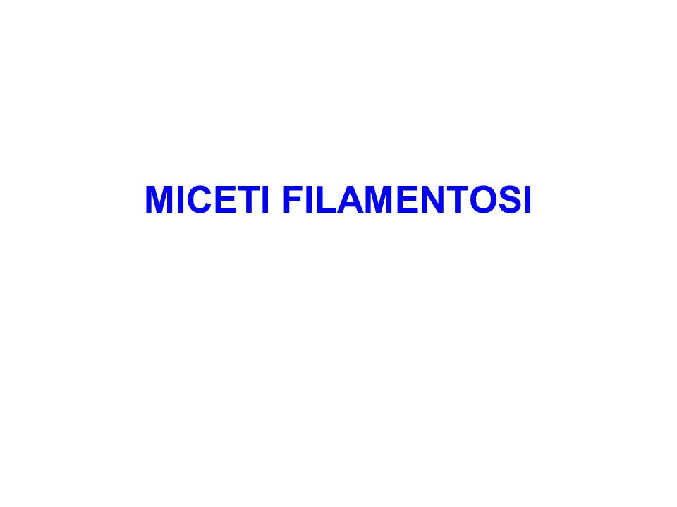 MICETI FILAMENTOSI
