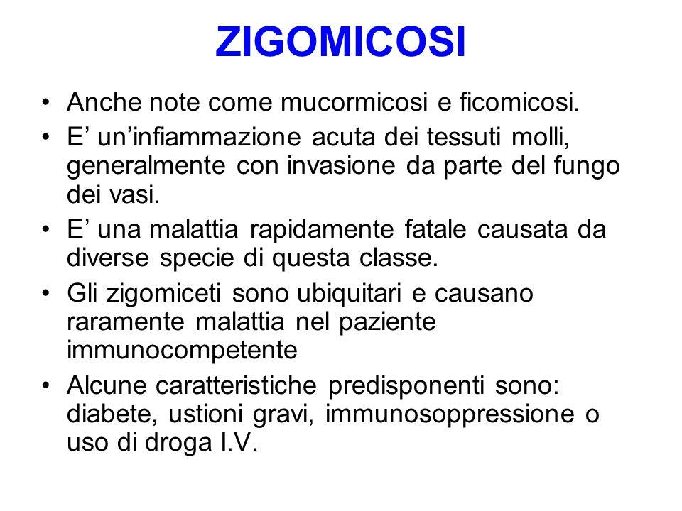 ZIGOMICOSI Anche note come mucormicosi e ficomicosi.