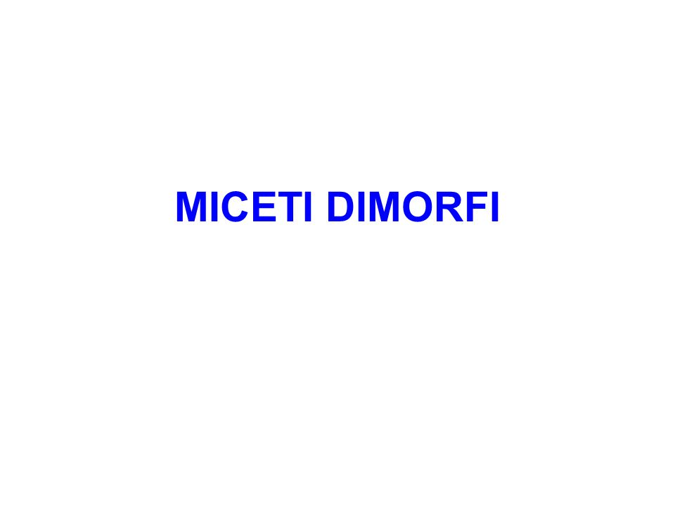 MICETI DIMORFI