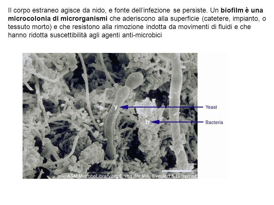Il corpo estraneo agisce da nido, e fonte dell'infezione se persiste