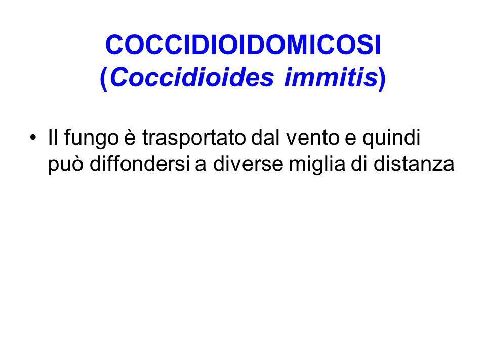 COCCIDIOIDOMICOSI (Coccidioides immitis)