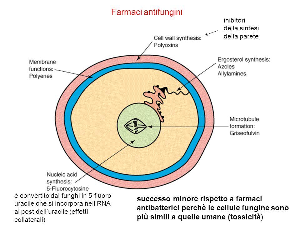 Farmaci antifungini inibitori della sintesi della parete.